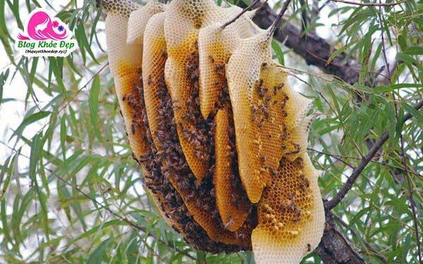 Thành phần bột cần tây mật ong Motree