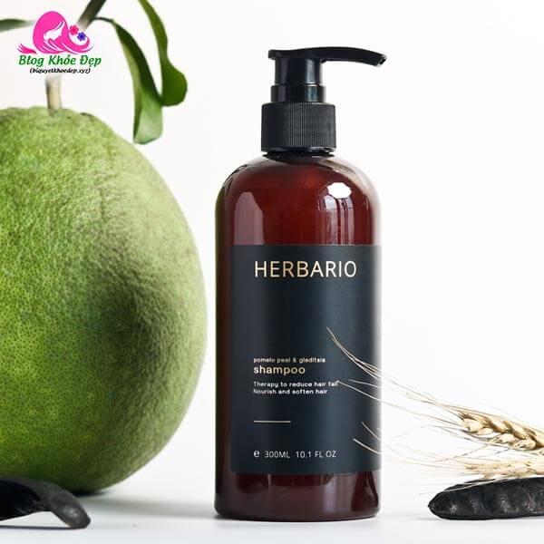 Dầu gội bồ kết trị rụng tóc Herbario